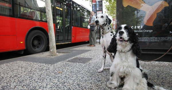 perros-autobus-fuengirola