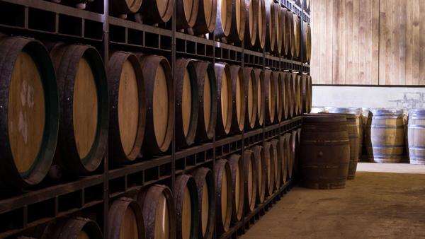torreoria-vintes-bodega-vino