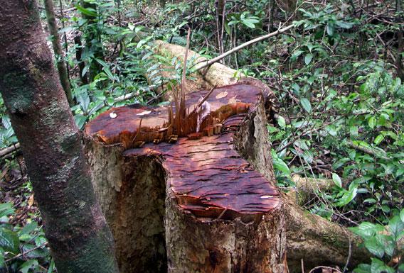 Incautan en Kenia contenedores con madera ilegal