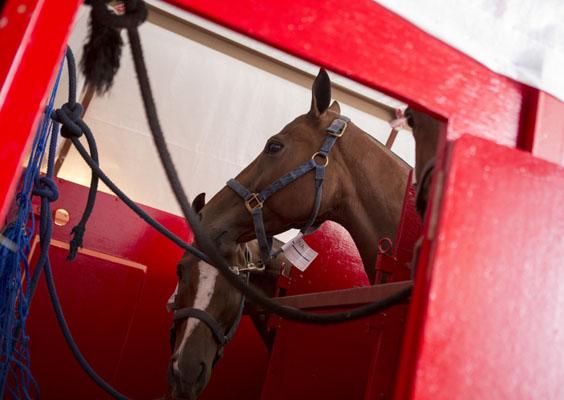 lan-cargo-caballos-transporte