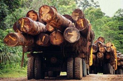 madera ilegal