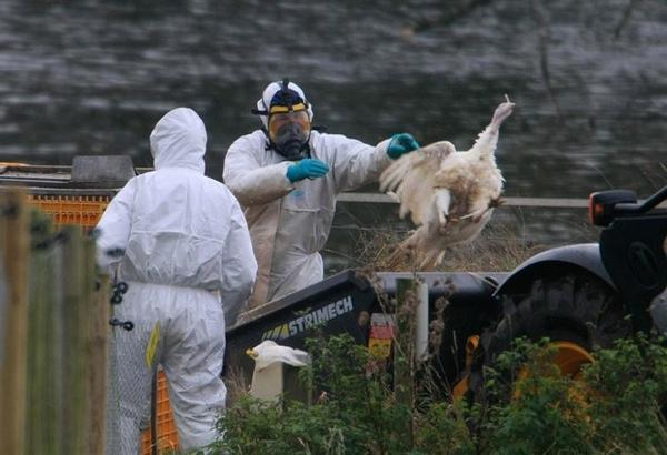 Gripe aviar afecta al transporte en Estados Unidos