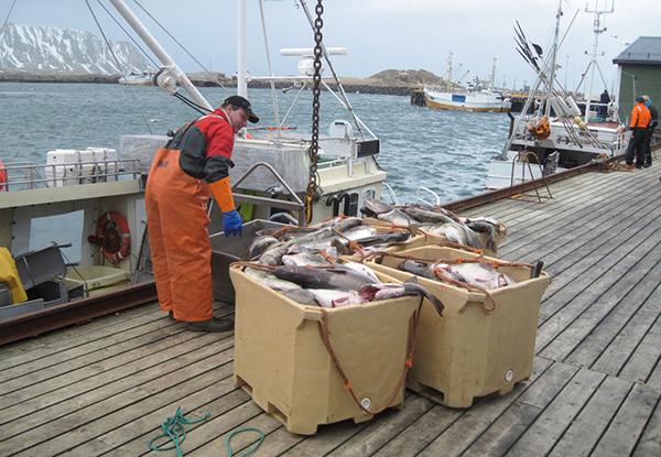 transporte-productos-pesqueros