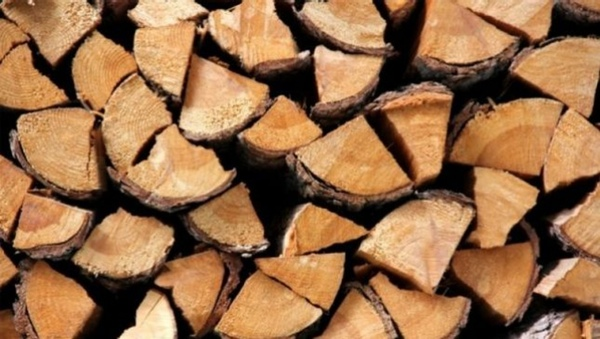 México lucha contra la exportación ilegal de madera