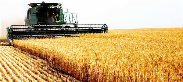 Argentina reducirá la producción de trigo el próximo año