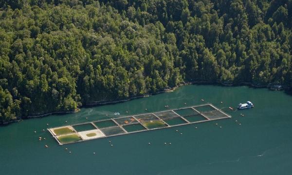Chile cooperara con productores de salmon