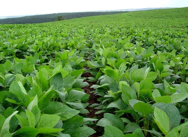 Exportaciones de soja baten records en Sudamerica