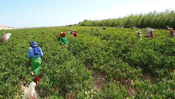 Perú aumenta su producción agropecuaria