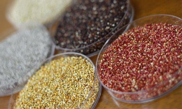 Perú exportará más productos agrícolas