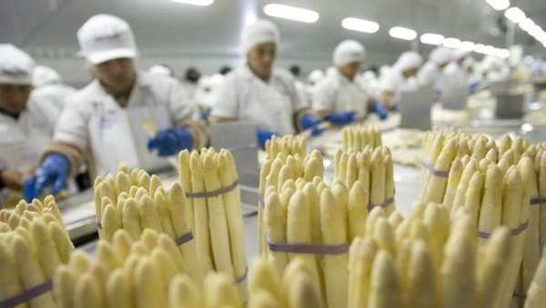 Agroexportaciones peruanas crecen un setecientos por cien