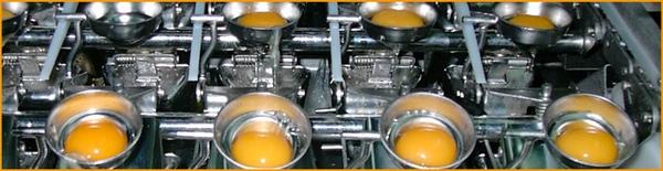 Jalisco puede exportar huevo pasteurizado a Japon