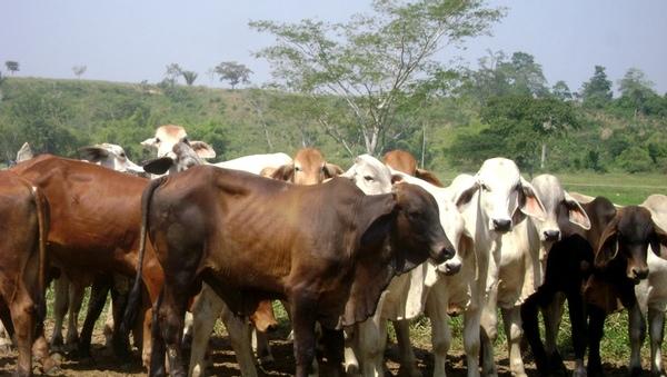 Mexico aumentara exportaciones de ganado a Estados Unidos