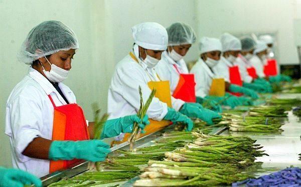 Peru incrementa exportaciones agroalimentarias a Estados Unidos