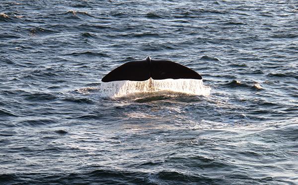 ballena-oceano