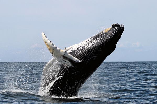 ballena-proyecto