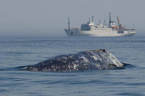 whalesafe-proyecto