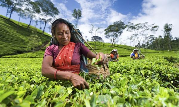 Sri_Lanka_comercio
