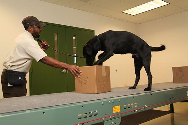 carga-aerea-seguridad-perro