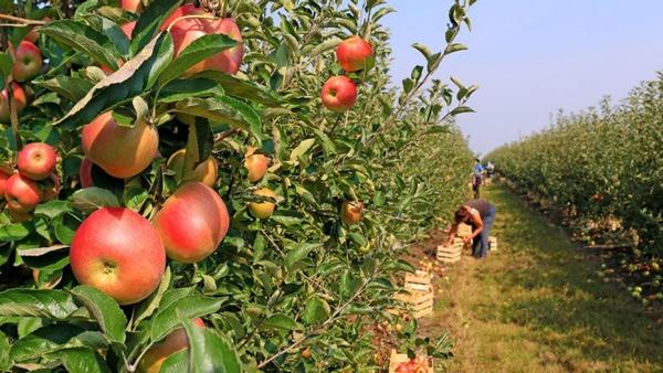 Argentina prepara la exportación de carne y fruta a Japón