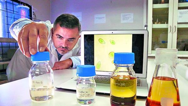 Investigadores chilenos prueban biodisel elaborado con microalgas