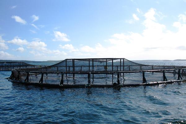 distribuidoras de pescado