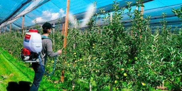 Argentina mejora acceso a requisitos fitosanitarios de importacion