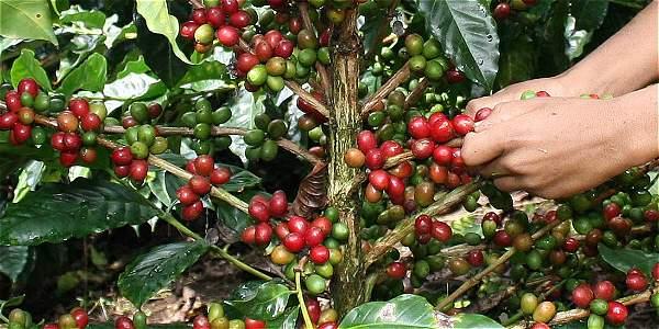 Colombia recibe más de 60 propuestas de 15 países para optimizar recolección de café