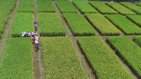 Productores de arroz de Colombia solicitan renegociar acuerdo comercial con Estados Unidos