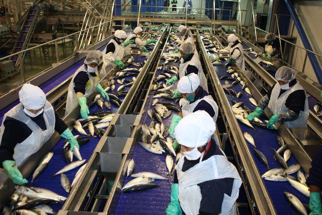 Tras veto sanitario, Brasil suspende exportaciones de pescado a la Unión Europea