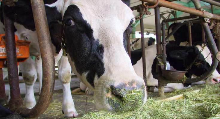 Uruguay aumenta sus exportaciones lácteas un 4% en un año