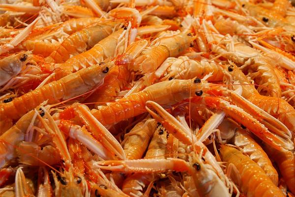 distribuidoras de pescados y mariscos