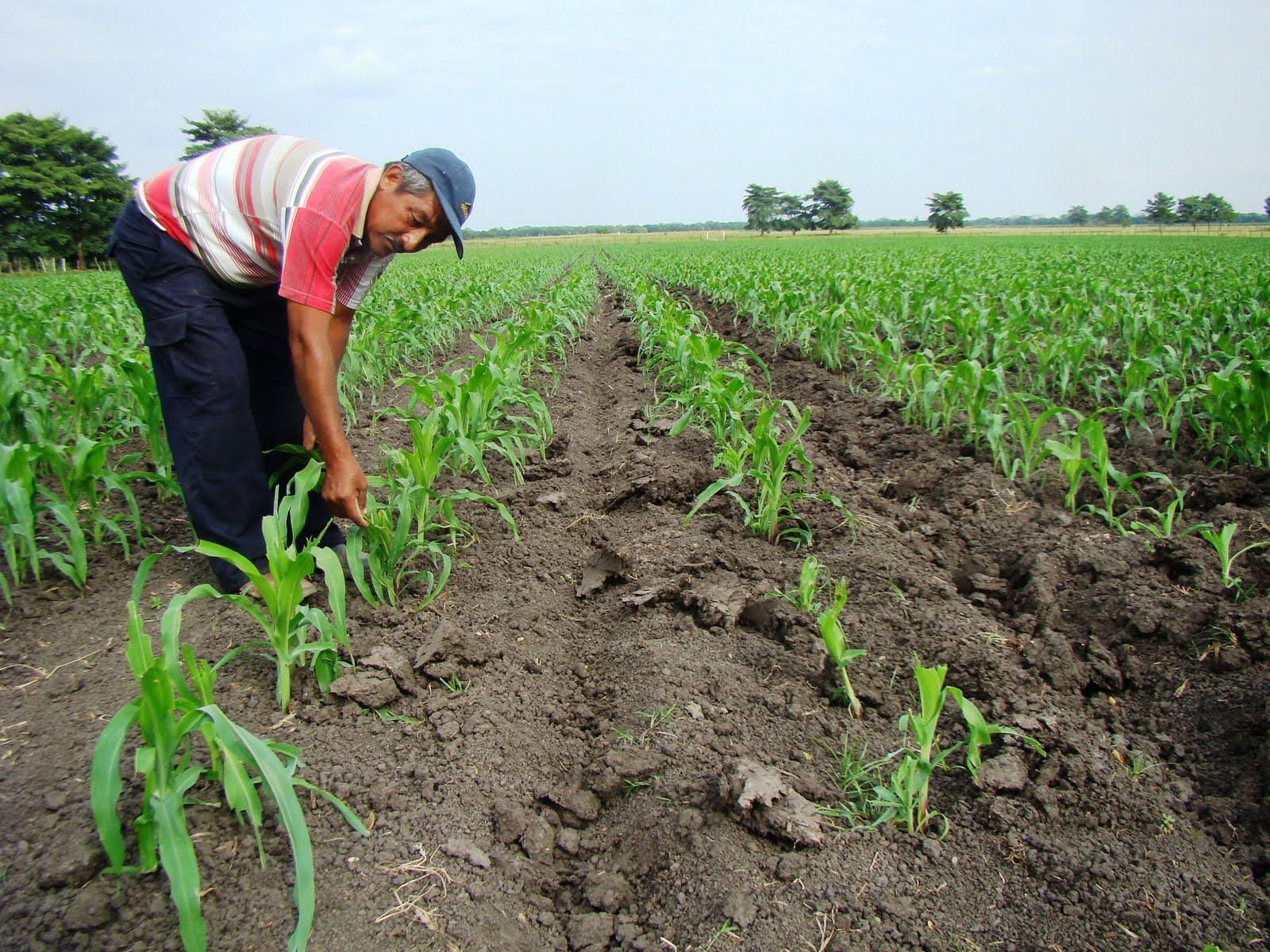 Productores resaltan beneficios de la apertura de mercado de Nicaragua y Colombia