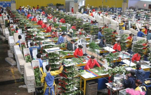 Colombia exportará 600 millones de flores a Estados Unidos por San Valentín