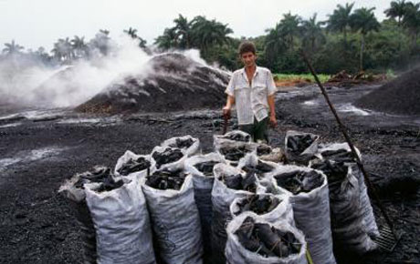 Cuba busca mejoras para la producción y distribución del marabú, fuente del carbón vegetal de exportación a Estados Unidos y Europa