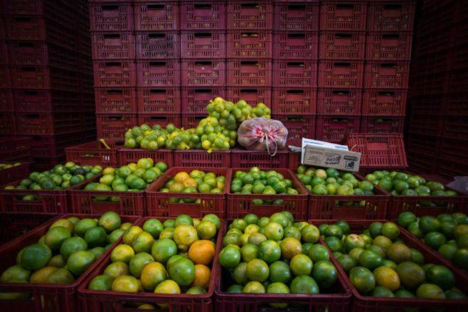 Estados Unidos autoriza la importación de cítricos de Colombia