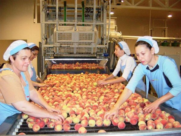 Extremadura. Empresas frutas