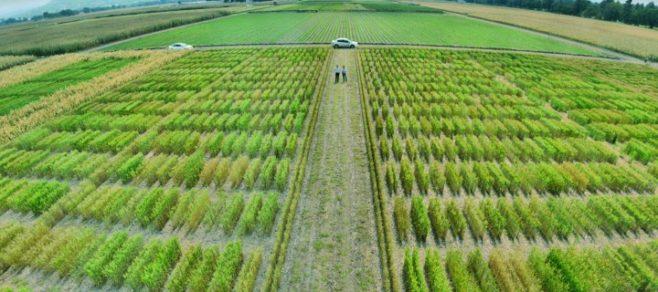 IICA realizará taller Latinoamericano sobre avances en agricultura sostenible