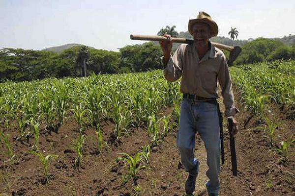 agricultura fao