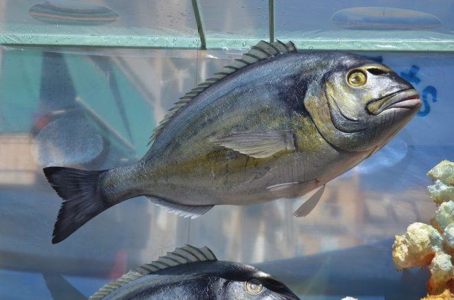 cuidado piscifactoria distribuidoras pescado
