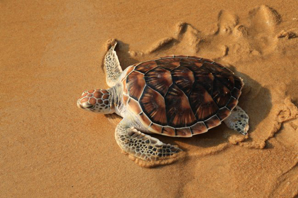 tortugas marinas