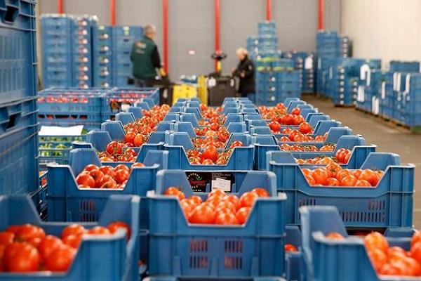Proceso logístico se convierte en elemento crítico para exportación hortofrutícola