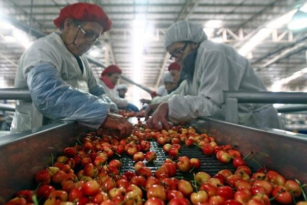 exportadores frutas chile