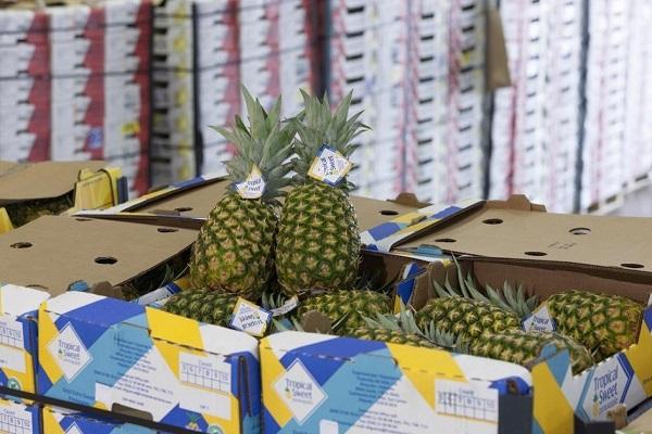 Puertos españoles están preparados para el movimiento de toda clase de mercancías