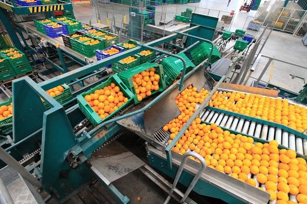 Smartchain, el nuevo plan para optimizar la logística hortofrutícola en Europa