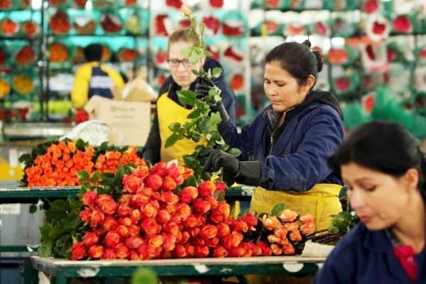 flores exportacion colombia
