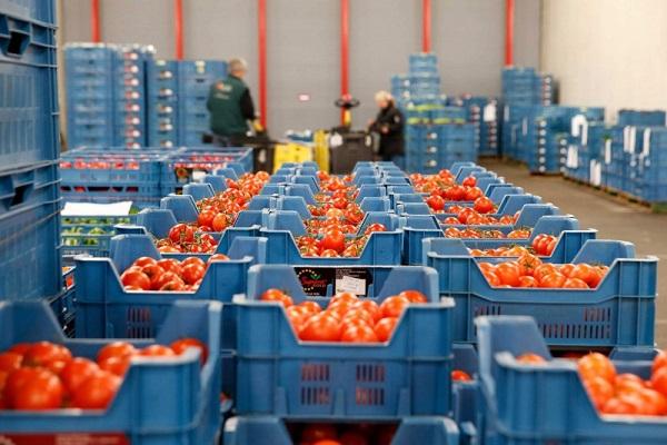 Importaciones hortofrutícolas españolas aumentan 11% en enero