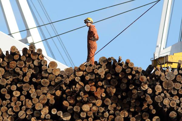 madera en rolo uruguay