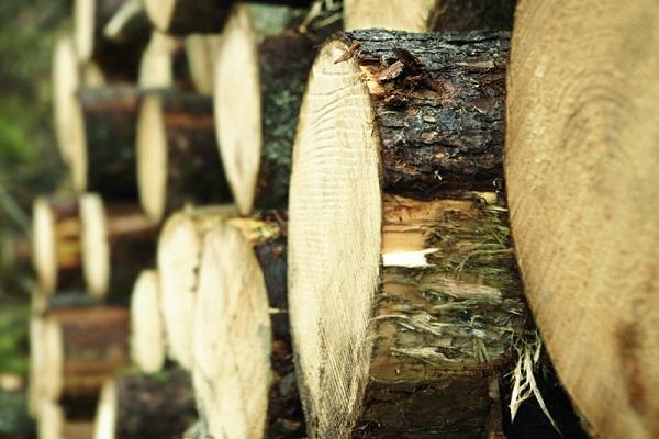 concepcion del uruguay madera