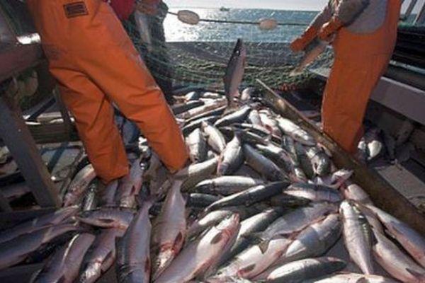 pesca y exportacion de jurel
