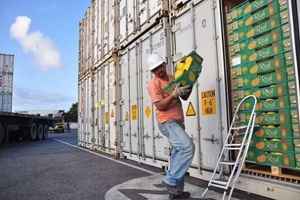 Sistema portuario español se posiciona como mercado hortofrutícola europeo